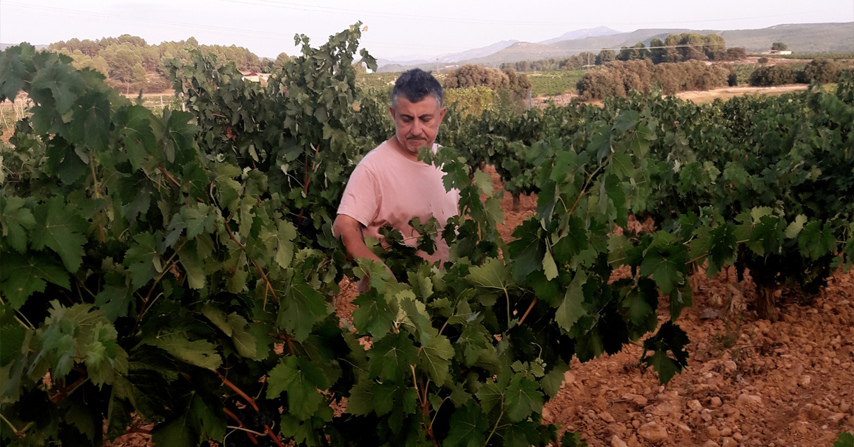 Challenges Of Creating Natural Wines